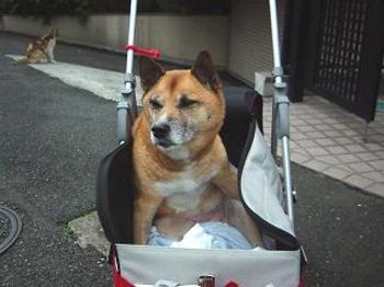 20070705dog2
