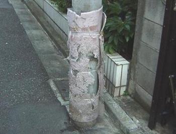 20080124inuyoke4