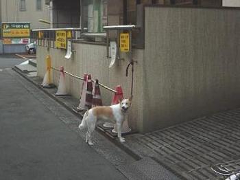 20080313dog1_2